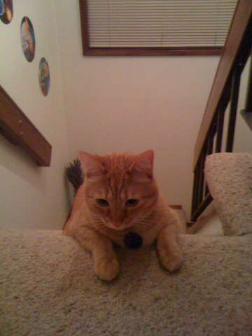 IMG_0854_cat_top_of_stairs.jpg