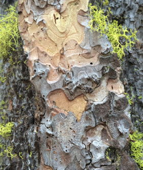 IMG_tree_bark_heart.jpg